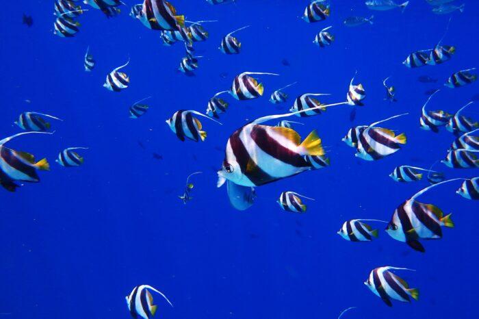 Maldivas a tu Aire